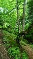 Dilijan National Park, Path way to Aghavnavank 10.jpg