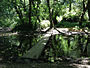 Dipsea Race - Course - Footbridge over Redwood Creek.jpg