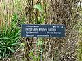 Discereaceae Bailleul jardin botanique.jpg