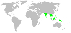 Distribution.stenochilidae.1.png