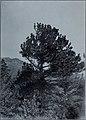 Documents de la session de la Puissance du Canada- 1911, (Volume 45, no.16, Documents de la session 25) (1911) (14761083264).jpg