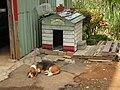 Dog - panoramio - Foxy Who -(^∀^)-.jpg