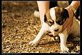 Dogs (5081438780).jpg