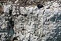 Dolostone (Put-in-Bay Dolomite, Upper Silurian; South Bass Island, Lake Erie, Ohio, USA) 7 (48541173891).jpg