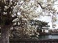 Dougakuji 20200303 02.jpg