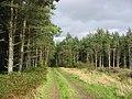 Duns Wood - geograph.org.uk - 9016.jpg