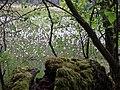Duvenstedter brook beim hexenstein 1.jpg