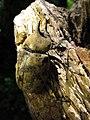 Eastern Hercules Beetle - Flickr - treegrow (1).jpg