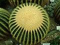 Echinocactus grusonii 2019-12-13 6516.jpg