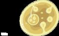 Echinococcus granulosus cyste (01).png
