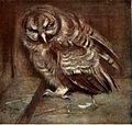 Edwin John Alexander - A young brown owl.jpg