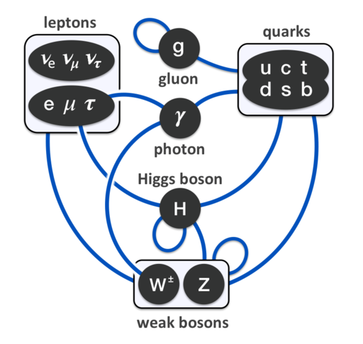 Elementary particle interactions in the Standard Model