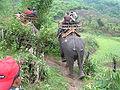 Elephant ride in Chiang Rai Province 2007-05 2.JPG
