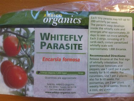 Encarsia formosa, a parasitoid, is sold commercially for biological control of whitefly, an insect pest of tomato and other horticultural crops. Encarsia formosa, an endoparasitic wasp, is used for whitefly control.jpg