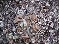 Engine block in woods 002.jpg