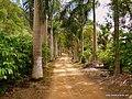 Estrada com palmeiras. - panoramio.jpg