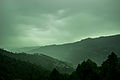 Ever Green. Murree.jpg