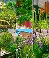 Exemples de fleurs du jardin.jpg