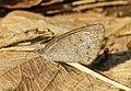 FLora and fauna of Chinnar WLS Kerala (15).jpg
