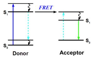Ligand binding assay - Jablonski diagram of FRET