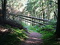 Fallen trees on the path to Lind End - geograph.org.uk - 1430420.jpg