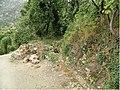 Faralya Village (10.3897-zookeys.348.5943) Figure 10.jpg