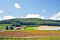 Farm - panoramio (16).jpg