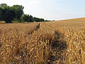 Farmland near Hillgreen - geograph.org.uk - 39348.jpg