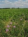 Farmland near Squallham - geograph.org.uk - 512550.jpg