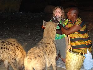 Feeding_the_Hyenas_5