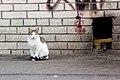 Feral cat in Saint Petersburg 2014-04-30.jpg