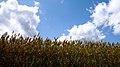 Field (2663073119).jpg