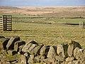 Field near Slaterfield Fell - geograph.org.uk - 1119624.jpg
