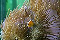 Fish (509154169).jpg