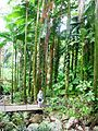 Flickr - brewbooks - Mary Ellen - Hawaii Tropical Botanical Garden (1).jpg