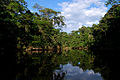 Flickr - ggallice - Oxbow lake, Yasuni.jpg