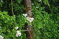Flora in Hillsboro along Rock Creek - Oregon.JPG