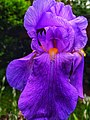 Floral photography - Photo by Giovanni Ussi 44.jpg