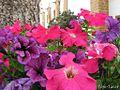 Flores al lado de un pino - panoramio.jpg