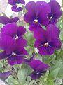 Flower101.jpg