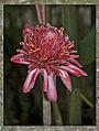 Flower (6937512931).jpg