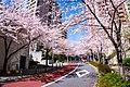 Flower viewing event in Tokyo, Japan; April 2014 (16).jpg