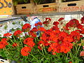 Flowers from napoli 04.JPG