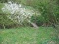 Footbridge and blossom - geograph.org.uk - 162975.jpg