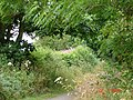 Footpath - Bridleway leading to St. Beuno's - geograph.org.uk - 29561.jpg
