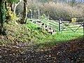 Footpath near Witcha Cottage - geograph.org.uk - 1650282.jpg