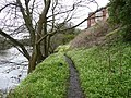 Footpath next to the River Ayr - geograph.org.uk - 764206.jpg