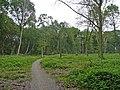 Footpath on Peasmarsh Common - geograph.org.uk - 831857.jpg