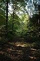 Footpath through Mallins Wood - geograph.org.uk - 593142.jpg
