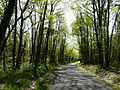 Forêt de Liorac Saint-Sauveur près le Dougnou (2).JPG